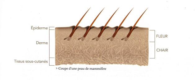 coupe dune peau - Qualité du cuir - comment reconnaître un vrai cuir de qualité (2/2)
