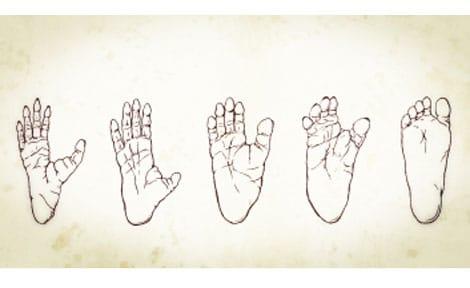 evolution des peids