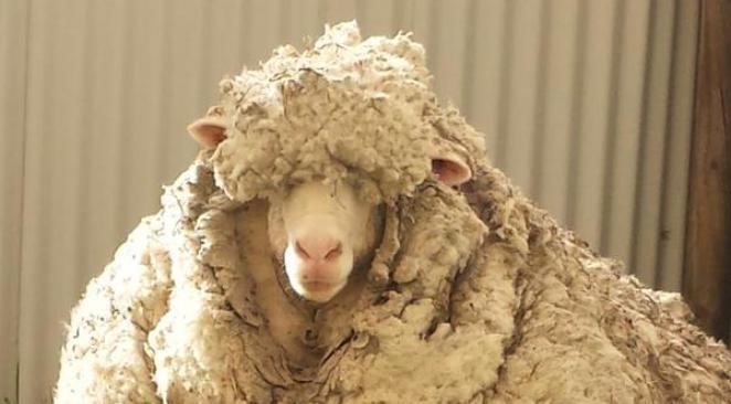 laine froid - Comment ne plus avoir froid aux pieds ?